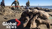 Woolly mammoth skeleton found in Siberian lake in Russia