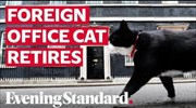 Palmerston the Foreign Office cat retires from Chief Mouser duties
